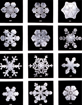Snowflakes by Wilson Bentley