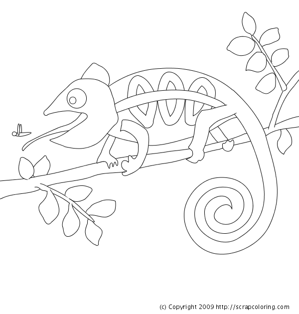 chameleon coloring pages - photo#23