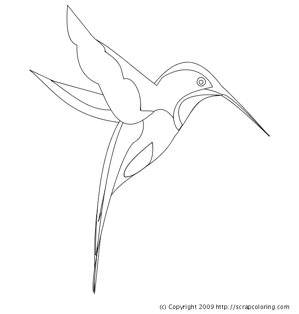 hummingbird coloring page hummingbird