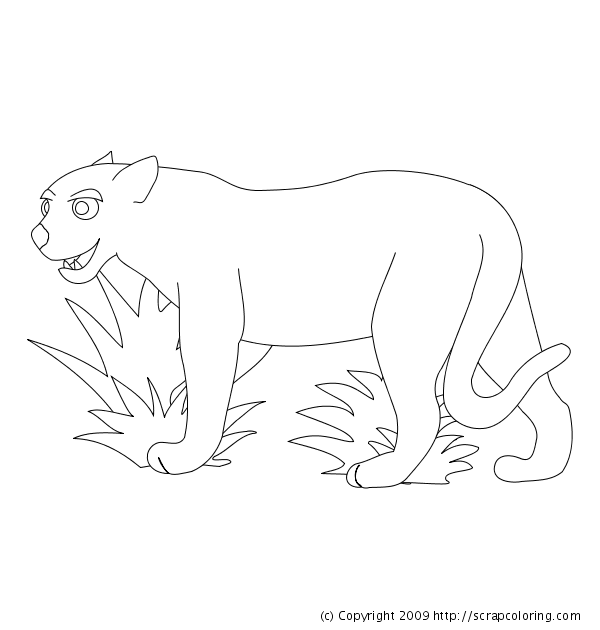 cougar or panther coloring page jaguar