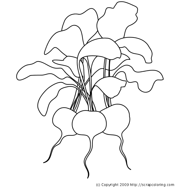 Radishes coloring page